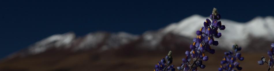 2012.04.16_Atacame Desert-164